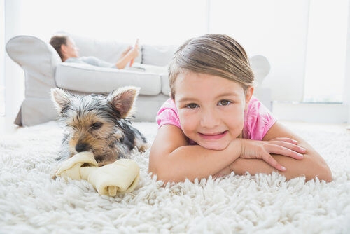 pet odor removal in Santa Clarita, CA