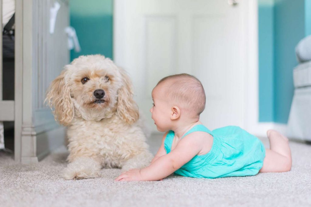 baby in blue outfit laying next to her pet dog in clean white carpet
