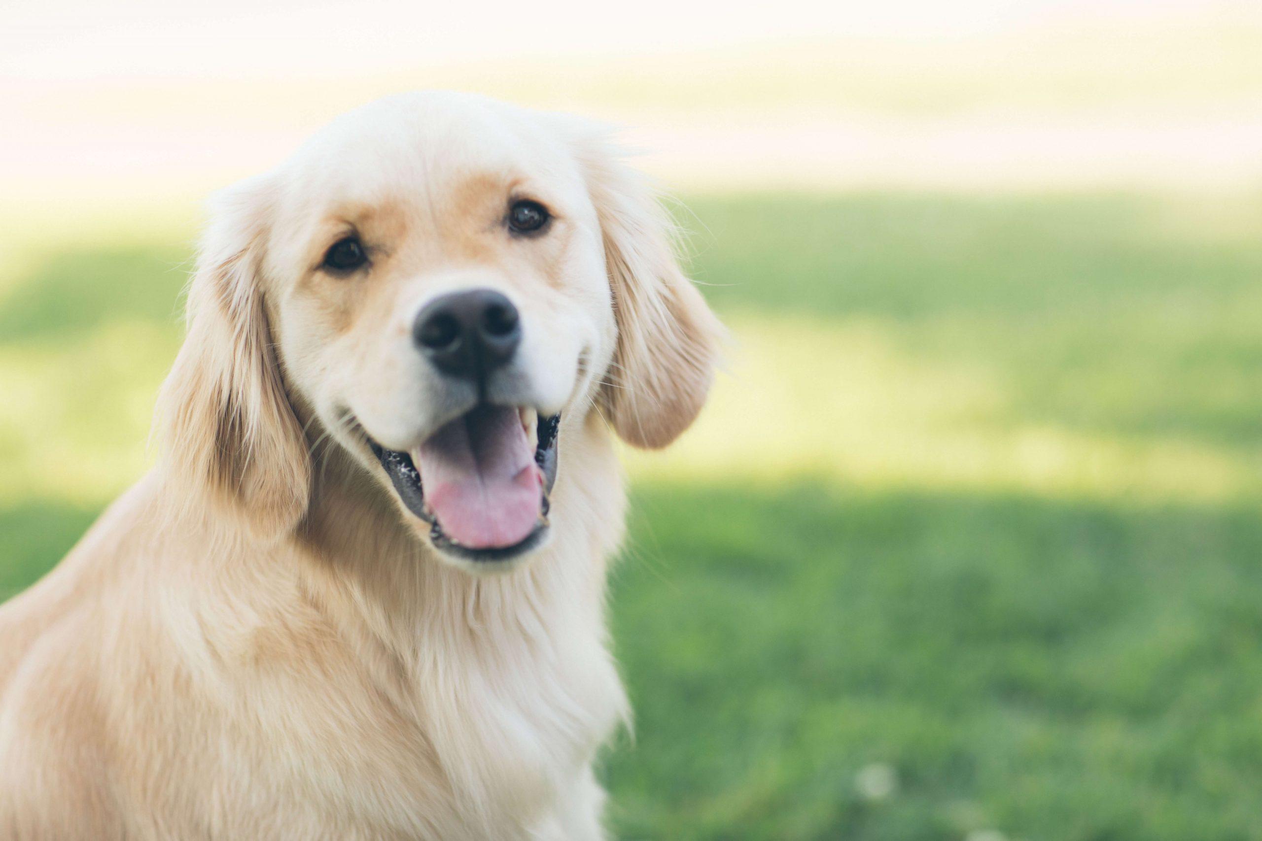 why spring clean pet urine